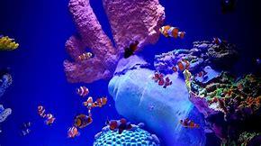 acuario inbursa 3