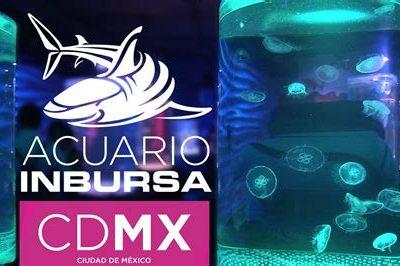 Inbursa Aquarium